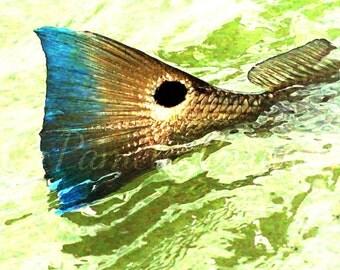 "Redfish art: red drum on canvas spottail bass painting redfish art red drum painting on canvas 10x14"""