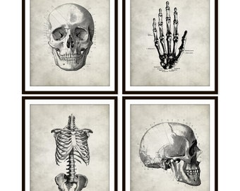 Vintage Anatomy Art Print Skull, Rib Cage, Hand Skeletal, Bone, Human Anatomy Set of Four 5x7, 8X10, 11x14 Medical Science Doctor Wall Decor