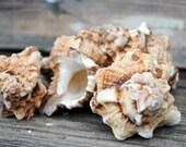 Beach Decor - 5pc Apple Murex Seashells - Seashells - Wedding - Home Decor - Hermit Crab - Crab