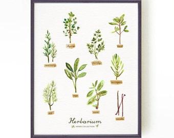 Kitchen poster, Botanical chart, Herb poster, Herb illustration, HERBARIUM Green kitchen decor, Apartment decor, Buy 2 Get 1 Free