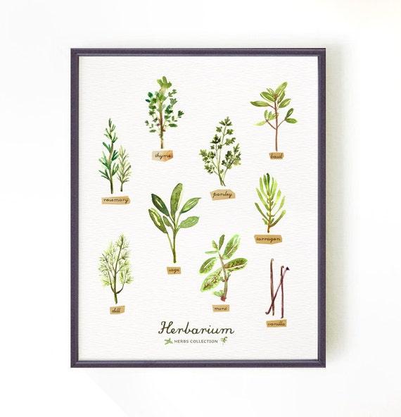 Items Similar To Kitchen Poster, Botanical Chart, Herb