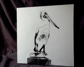 Pelican  -- 12 x 12 Pen and Ink Drawing on Canvas