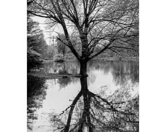 Pond Reflections Print, Water Reflect, Landscape Photograph, Nature, Fine Art Photography, 5x7, 8x10, 11x14