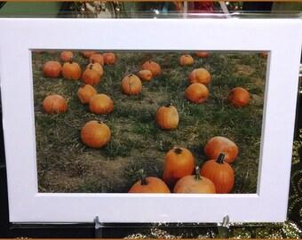 Pumpkin Photographs (2003)
