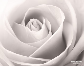 Black and White flower photography, rose, macro, elegant,  neutral colors, wall decor, fine art photography print