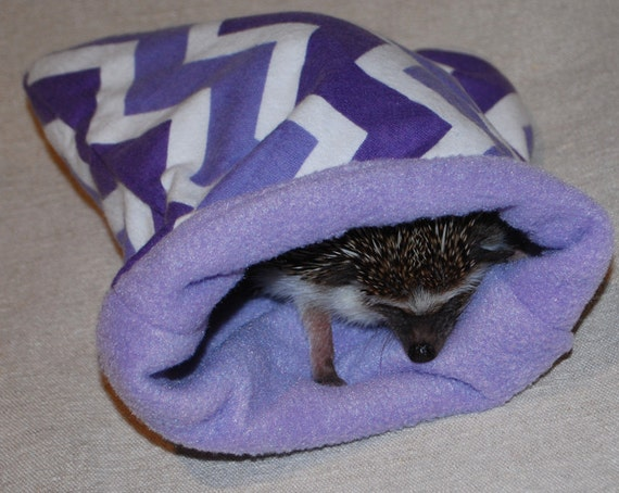 Many Patterns Small Pet Hedgehog Guinea Pig By