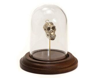 Animal Skull Ape Skull Chimpanzee Animal Skull Home Decor Science Display Bronze White Bronze