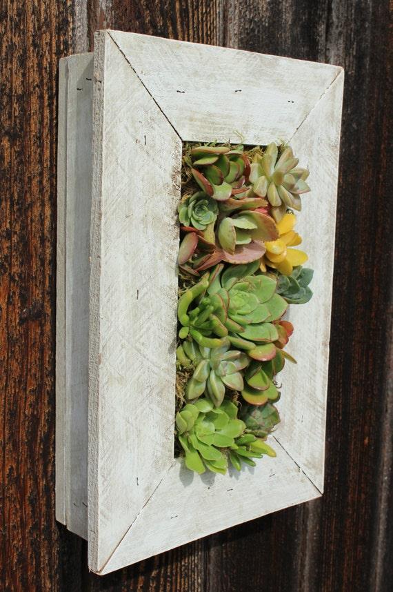 Indoor Outdoor Living Wall 100 Handmade Cedar By