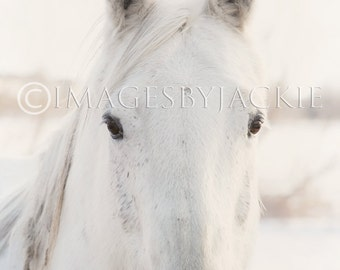 White Horse Fine Art Photography Digital Download