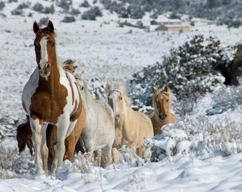 Winter Run-Horse Gallery Wrap Canvas