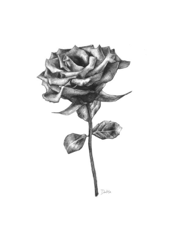 Articoli simili a matita rosa disegno stampa fine art for Disegni di fiori a matita