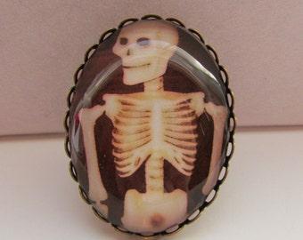 Skeleton Adjustable Brass Oval Ring Under Polished Glass