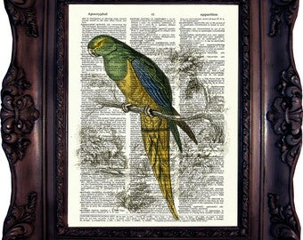 Parrot Dictionary art print. Vintage Art Print. Print on Book Page. Parrot from Natural History. 19. century. Dictionary print. Code:379