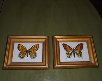 Vintage French Butterfly prints