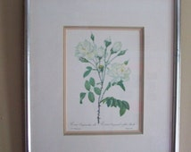 Pierre Joseph Redoute Rosa Campanulata Alba flower/ Vintage Lithographic Floral wall art/ framed Ethan Allen Inc/ Shabby Cottage Home Decor.