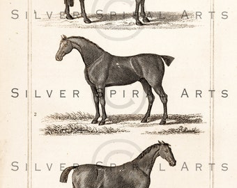 Vintage HORSE Illustration Printable Horses Digital Download For Wall Art, Collage Sheets, Clip Art, Scrapbooking, Fabric Transfers, Pillows