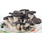 Eco-friendly Oyster Mushroom Kit