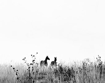 NEW!!! Horse Photograph - black and white horse photography - 8x10 nature horse photo, horse, landscape, Colorado