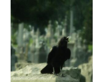 Gothic Print, Cawing Bird, Blackbird, Raven, Dark Art, Graveyard, Halloween Photograph, Goth Wall Art, Crowing Crow - Eerie Crow
