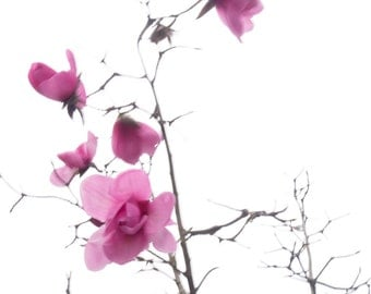 Tree photograph  pink hot pink  spring adventures  Feenland // photography / Magnolia / wall art