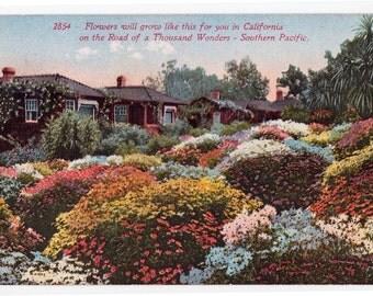 Rose Blooms - 3 Vintage Postcards Tinted Rose Gardens - Beautiful! Circa 1910