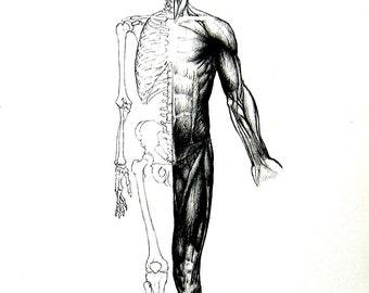 Human Anatomy - The Muscles - 1975 Vintage Anatomy Print -  12 x 9