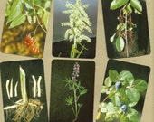 Edible & Poisonous Plants of the Western States, Cards for ATCs, Collage, Scrapbooking, Paper Arts, Assemblage and MORE PSS 1675