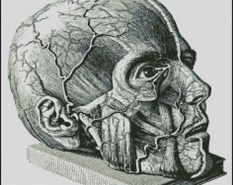 Anatomical Head cross stitch pattern No.767