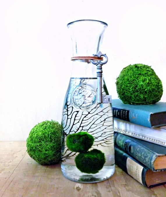 mousse de mc coy grande boule terrarium aquarium mousse. Black Bedroom Furniture Sets. Home Design Ideas