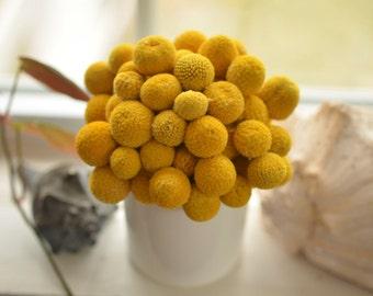 Billy Ball Pot, summer arrangement, fall arrangement, dried craspedia arrangement, dried billy ball arrangement, bily ball decor
