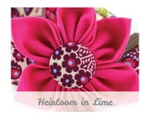 Pink Dog Collar Flower - Heirloom in Lime