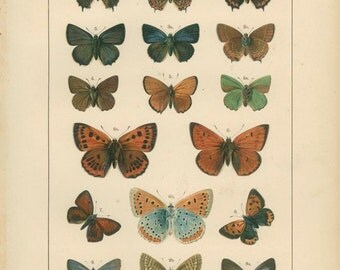 Blue Butterfly, Copper-Tailed, Plate 4, Butterfly Art Print, Butterfly Wings, Lepidoptera, Natural History, Country Cottage Decor
