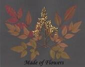 Pressed Flower Art Print Ornamental Bamboo