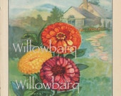Zinnia. 1926 country cottage garden old fashioned botanical color lithograph print