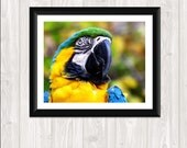 Blue & Yellow Macaw Bird Photography Fine Art Nature Photo Print Nature Photography Home Decor Landscape 5 x 7 and 8 x 10