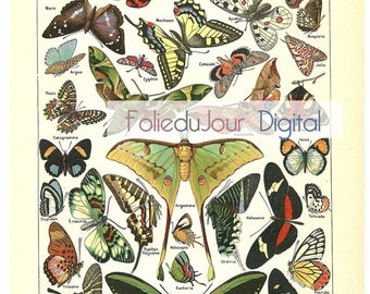 "Butterfly Digital file French vintage dictionary plate - 8.5 x 11"" - Instant Download"
