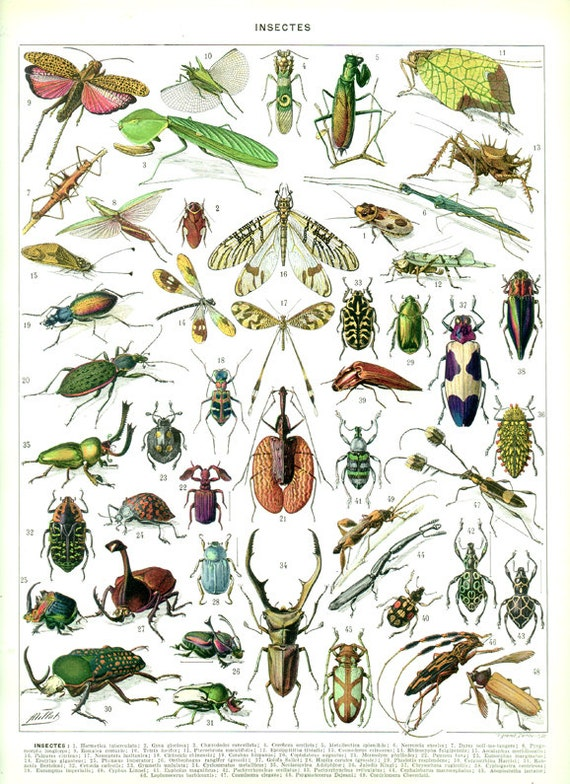an analysis of the anatomy and classes of insects in entomology 2015 entomology (b&c) identify insects and selected immature forms 30 orders and 100 families process skills: observation, inferences, data and diagram analysis, make and/or use a dichotomous key on insects topics may include structure and function of internal and external anatomy, ecology, behavior & history.