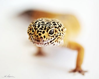 Leopard Gecko, PRINT and CANVAS Gallery Wrap Artwork Photo Room Decor Reptile Lizard Child black amber Also iPhone Samsung Case gift him her