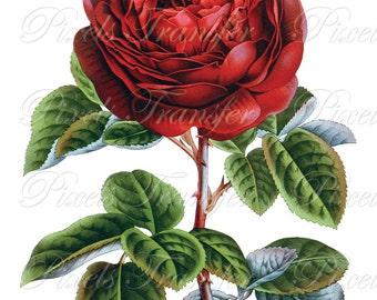 ROSE Instant Download, Digital Downloads, Image Digital, red rose for Valentines 307