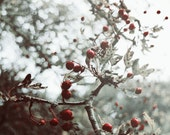 Fine Art Photography Digital Download Christmas Autumn Red Berries Bokeh Seasonal Winter Surreal Printable Art Photo Photograph