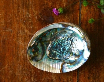 Abalone Shell Large Smudge Bowl Ceremony Altar Bowl Smudging Dish Seashell Craft Supply New Age Native Shell Smudge Tools Sacred Healing