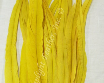 Coque Feathers, Gold/Yellow, 15 - 18 inch per 12 feathers,