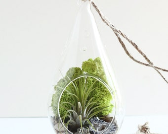 Geode, Pyrite, and Air Plant Teardrop Terrarium Kit with Chartreuse Reindeer Moss
