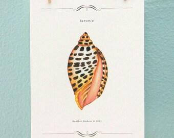 Wall Art Sea Shell Art Print 5 x 7
