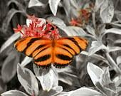"""Butterfly art: orange butterfly black white pop of color 8x10"""" print butterfly photo black white orange photo"""