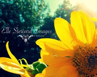 Sunned Flower { Print } Fine Art Photography
