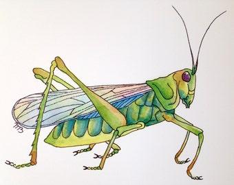 Grasshopper Watercolor Fine Art Print