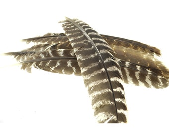 Long Barred Turkey Wing Feathers (Bag of 10)
