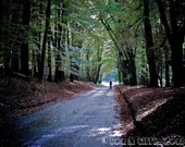 Cycle in the Woods, art photography, England, wall art, original print, colour photography, nature, countryside.