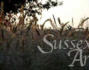 Meadow grasses at sunset wall art photograph Instant Download